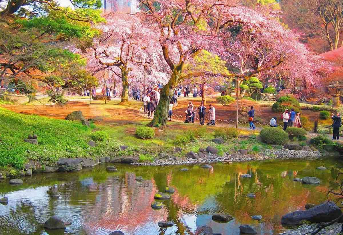 Les jardins de Koishikawa Koraku au Japon
